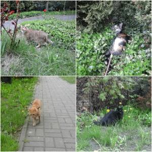 koty na wybiegu