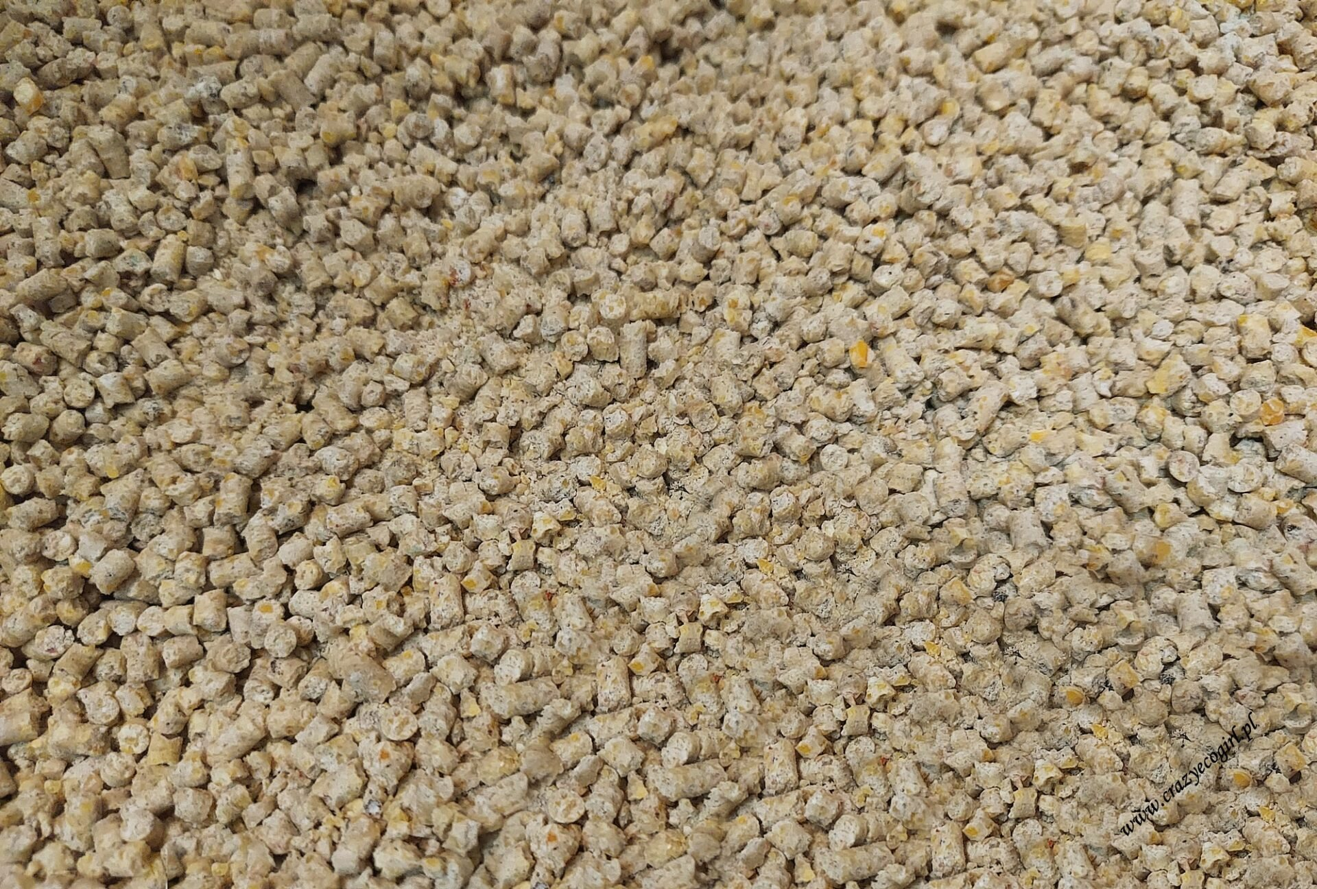 Żwirek kukurydziany Calitti